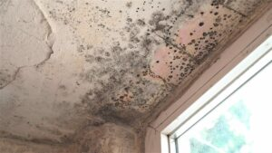 can mold grow on concrete? Yes, mold can grow on any surface with moisture. Mold growth on the concrete ceiling near a window opening.